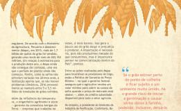 A história do trigo – Do cultivo até a venda